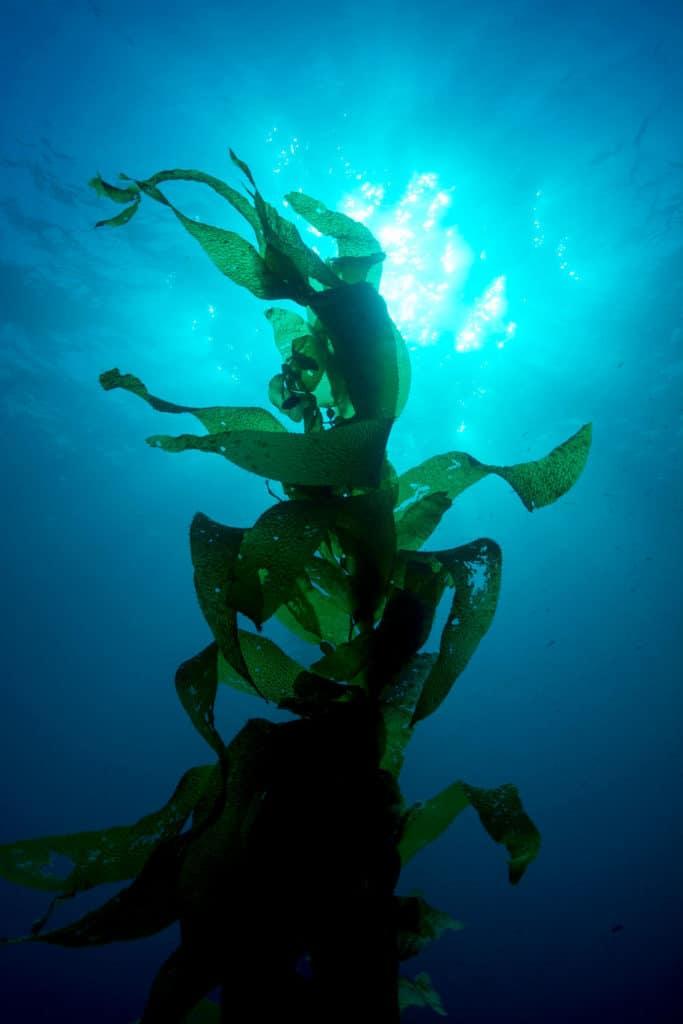 hva-skjer-seaweedfestival-526060823